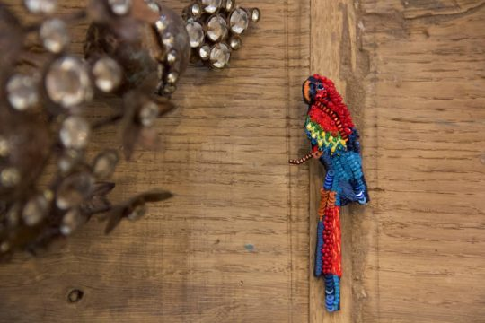 pappagallo
